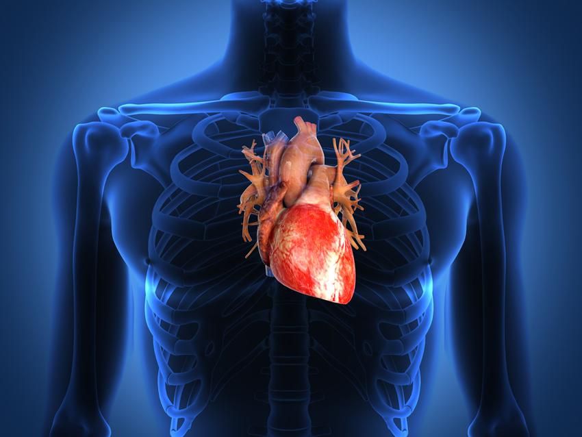 Jantung sihat, badan sihat