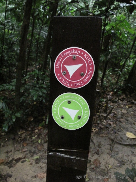 scouts trail for hiking in kota damansara community forest